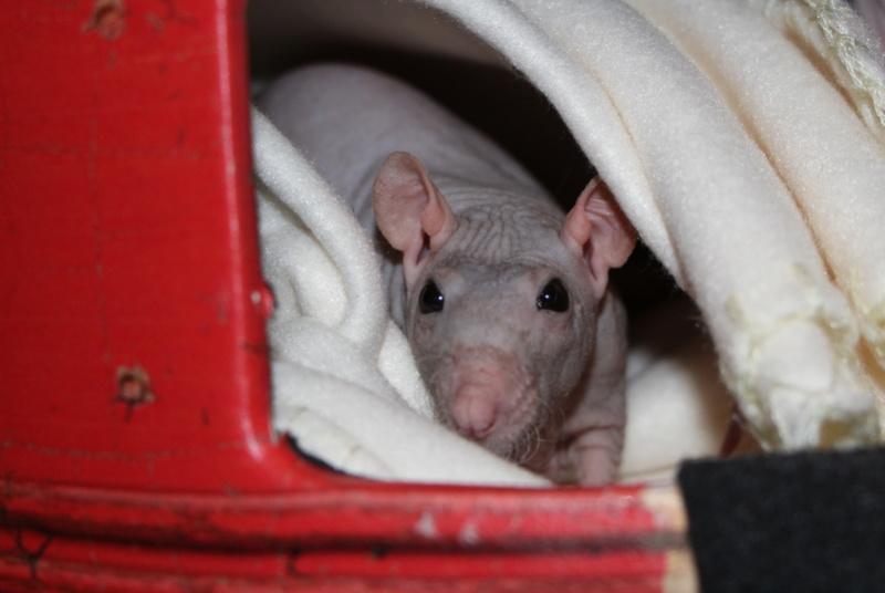 Les ratons de Random Img_1810