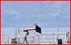 [Autre sujet Marine Nationale] Démantèlement, déconstruction des navires - TOME 2 - Page 20 Capt1118
