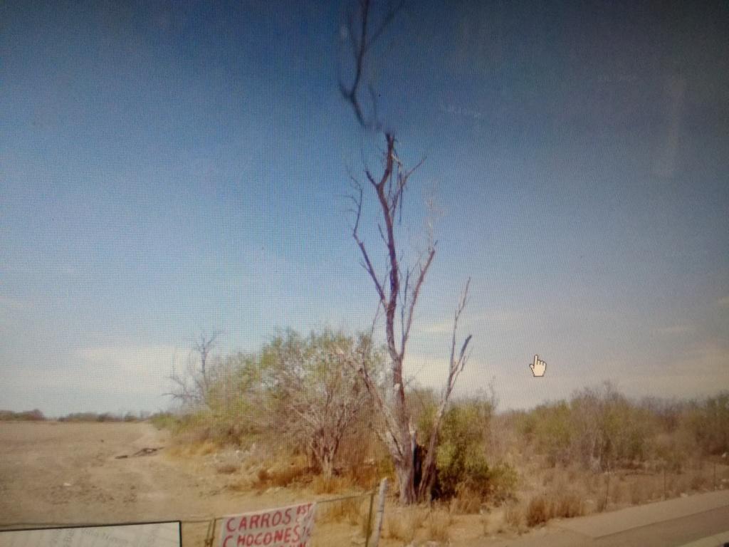 Rayo impacta árbol secó... posible tesoro? Img_2010