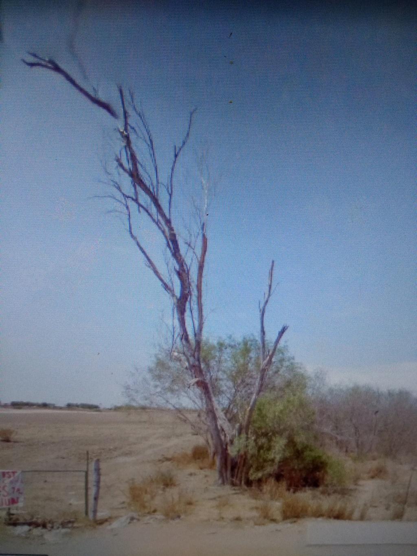 Rayo impacta árbol secó... posible tesoro? Img_2011