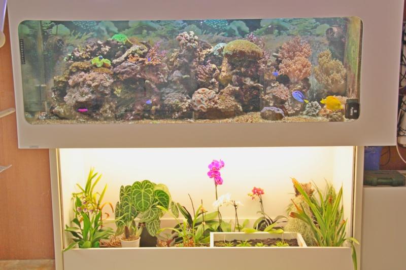 Mon petit aquarium 56 l Img_4715