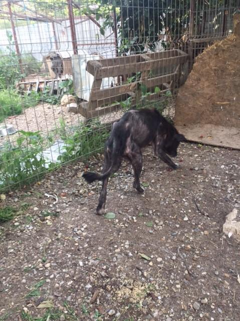 ALICE (ex BOUNTY) - femelle croisée de taille petite, née environ en mars 2007 - CARMINA BUCAREST . Adoptée par Isabelle (depart75)- décédée  0bd18410