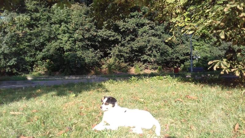 LINDA - chienne croisée de petite taille, née environ en juillet 2014. Joueuse et amicale (Pascani) - adoptée par Delphine (18) 21247611