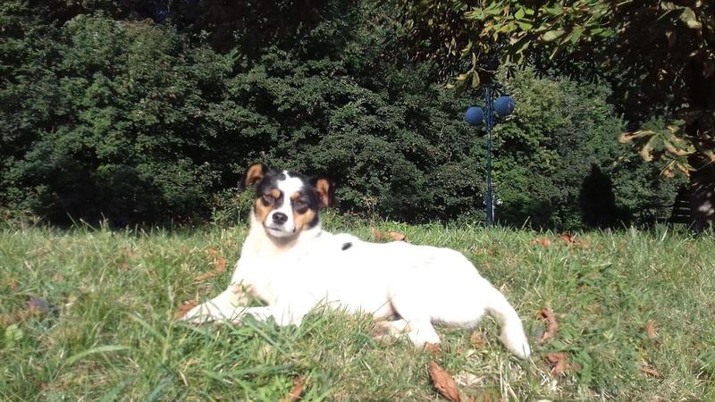 LINDA - chienne croisée de petite taille, née environ en juillet 2014. Joueuse et amicale (Pascani) - adoptée par Delphine (18) 21247812