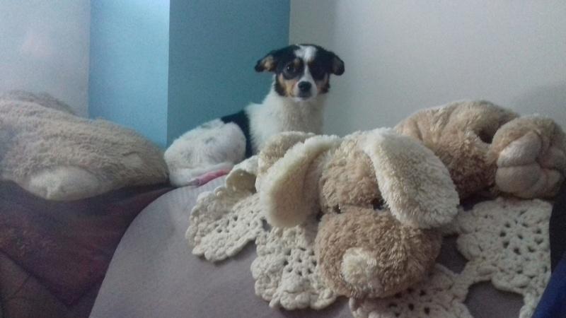 LINDA - chienne croisée de petite taille, née environ en juillet 2014. Joueuse et amicale (Pascani) - adoptée par Delphine (18) 21267310