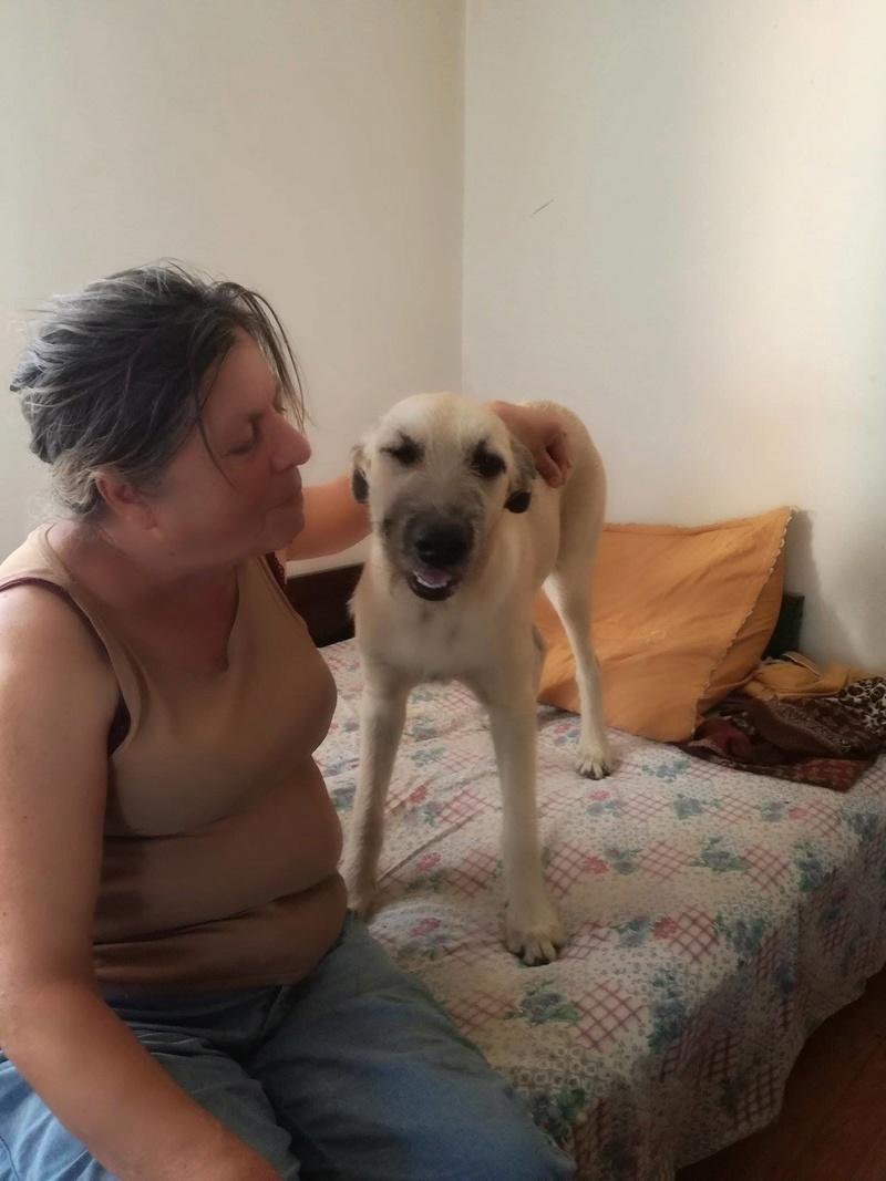 LENA - femelle croisée de taille moyenne, née en mars 2017 - CHEZ LUIZA (BUCAREST) 21329513