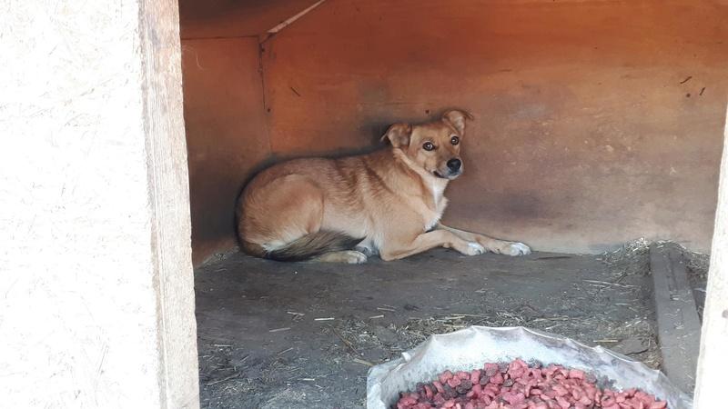 MAIKA - chienne croisée de taille moyenne, née 2015 - (Pascani) REMEMBER ME LAND 21390412