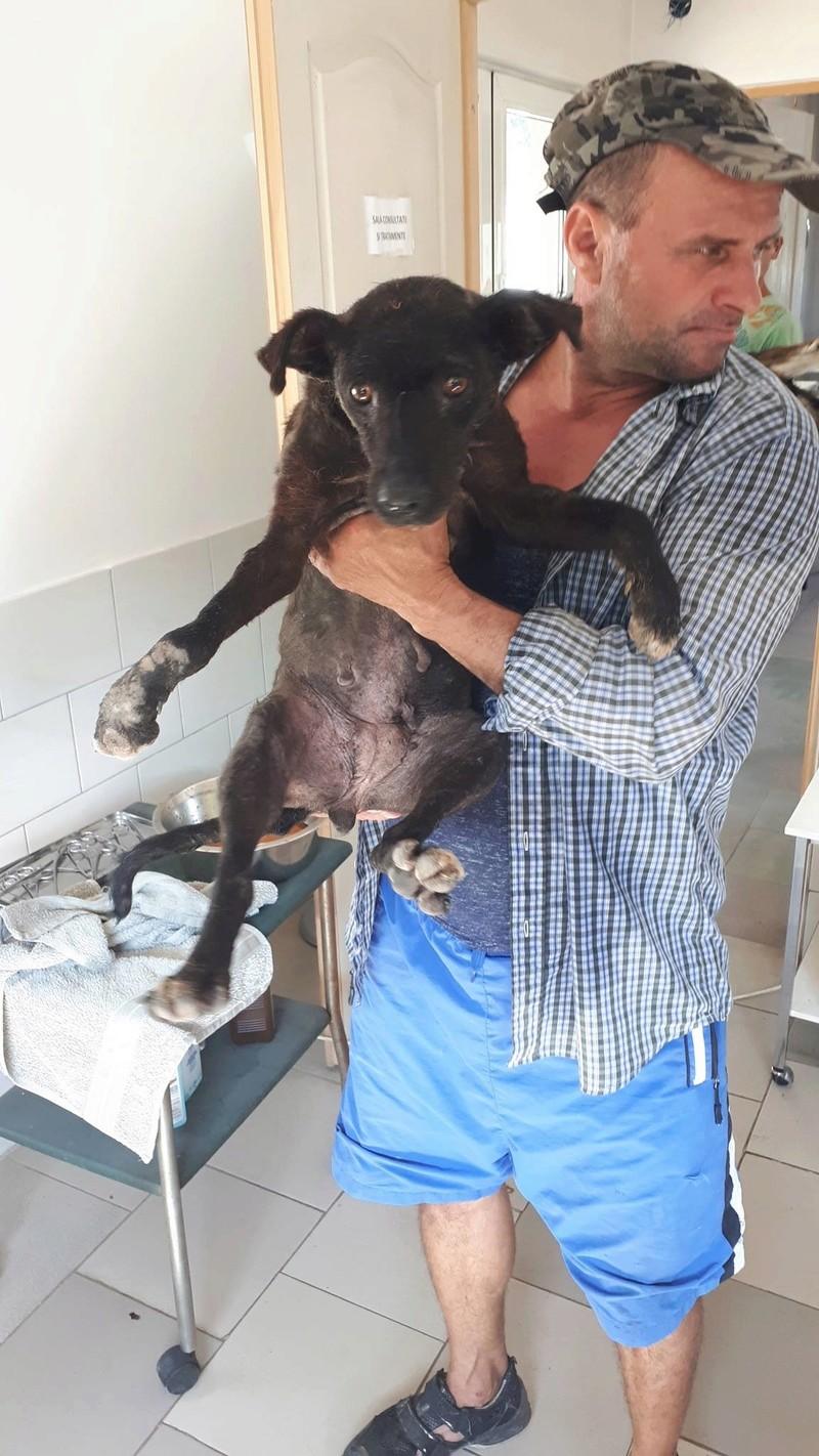JOY (ex MAMINA) - jolie femelle croisée de taille petite à moyenne, handicapée Tri-pattes née en 2014 (PASCANI) - REMEMBER ME LAND - Adoptée par LAURENCE (BELGIQUE) 21640311
