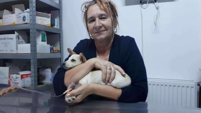CAPSUNICA - femelle croisée de taille mini adulte, née mai 2017 - Adoptée par Christine (depart 84) 21886911
