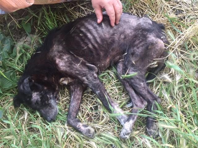 ALICE (ex BOUNTY) - femelle croisée de taille petite, née environ en mars 2007 - CARMINA BUCAREST . Adoptée par Isabelle (depart75)- décédée  2891dd10