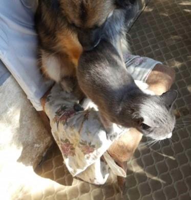 LEA (ex LOLLO BRIGITA) - chat femelle, née en 2015 - CAMELIA BUCAREST - Adoptée par Veronica (Belgique) Img_0031