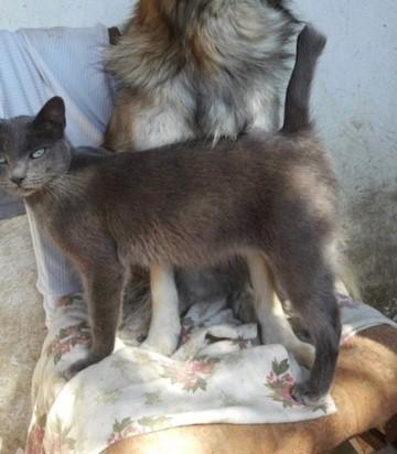 LEA (ex LOLLO BRIGITA) - chat femelle, née en 2015 - CAMELIA BUCAREST - Adoptée par Veronica (Belgique) Img_0033