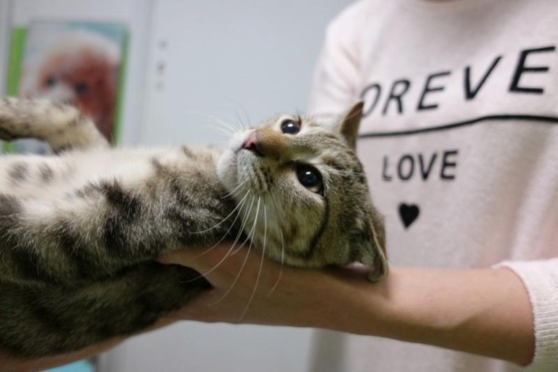 COCOS - chat mâle, né en juin 2017. Très gentil - CARMINA BUCAREST. Adopté via une autre asso Img_1511