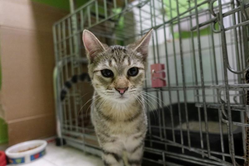 COCOS - chat mâle, né en juin 2017. Très gentil - CARMINA BUCAREST. Adopté via une autre asso Img_1512