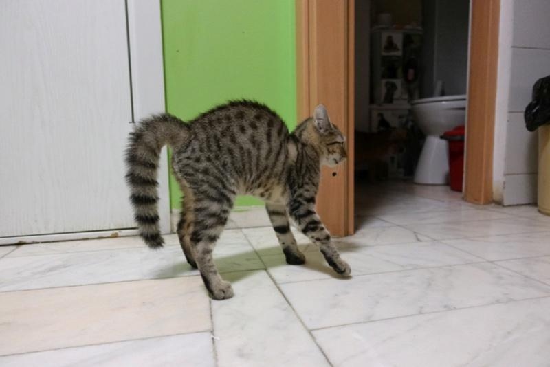 COCOS - chat mâle, né en juin 2017. Très gentil - CARMINA BUCAREST. Adopté via une autre asso Img_1516