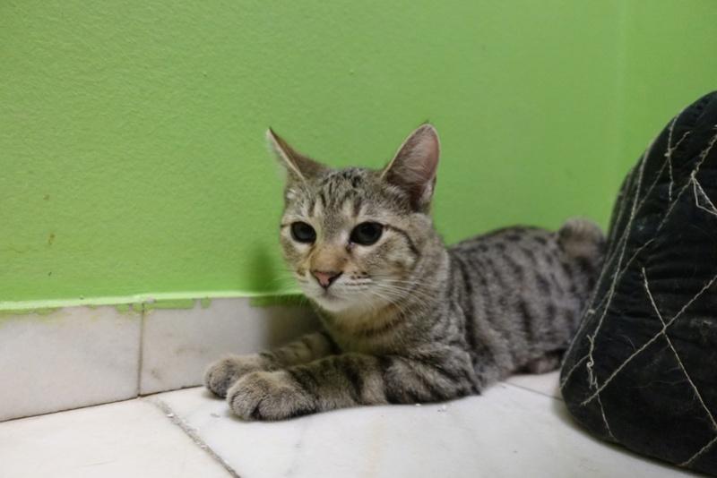 COCOS - chat mâle, né en juin 2017. Très gentil - CARMINA BUCAREST. Adopté via une autre asso Img_1517