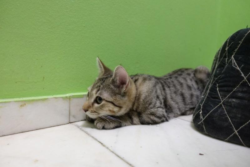 COCOS - chat mâle, né en juin 2017. Très gentil - CARMINA BUCAREST. Adopté via une autre asso Img_1518