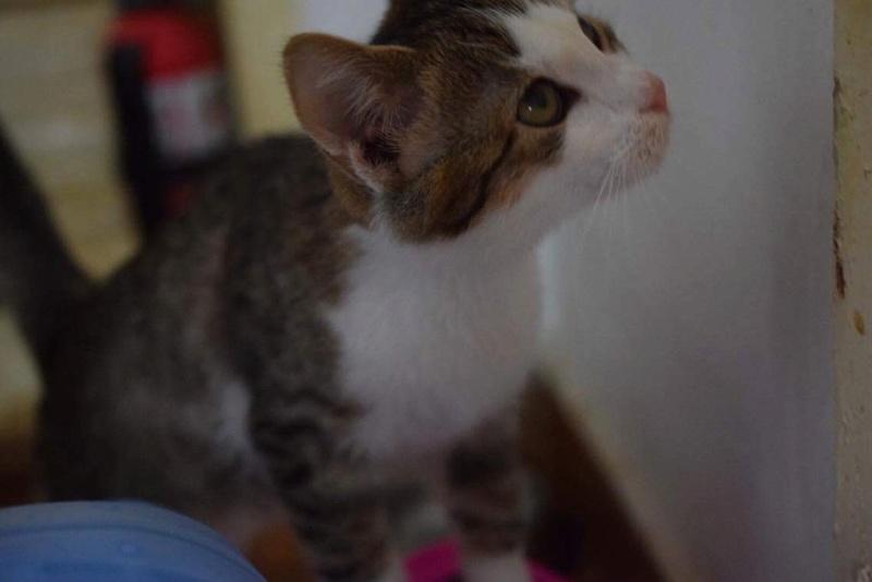 MUGUREL - chat mâle, né mai 2017. Très gentil et doux - CARMINA BUCAREST - adopté en Allemagne Img_1523