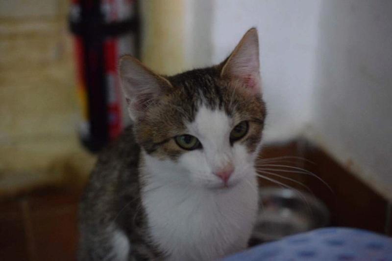 MUGUREL - chat mâle, né mai 2017. Très gentil et doux - CARMINA BUCAREST - adopté en Allemagne Img_1524