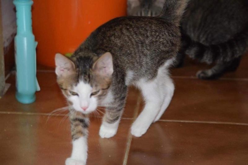 MUGUREL - chat mâle, né mai 2017. Très gentil et doux - CARMINA BUCAREST - adopté en Allemagne Img_1529
