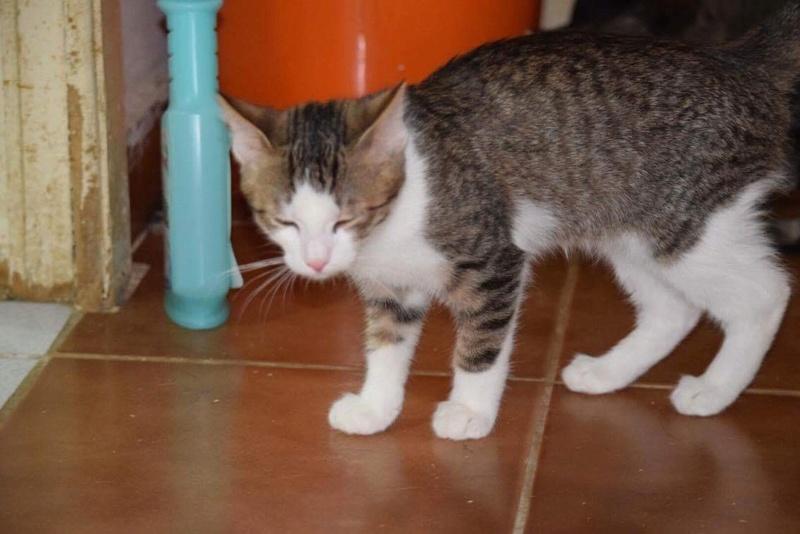 MUGUREL - chat mâle, né mai 2017. Très gentil et doux - CARMINA BUCAREST - adopté en Allemagne Img_1530