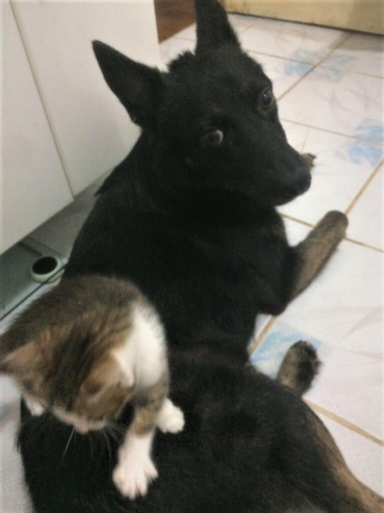 MUGUREL - chat mâle, né mai 2017. Très gentil et doux - CARMINA BUCAREST - adopté en Allemagne Img_4411