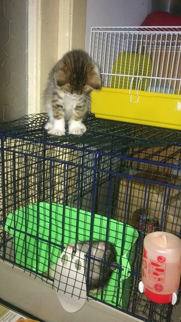 MUGUREL - chat mâle, né mai 2017. Très gentil et doux - CARMINA BUCAREST - adopté en Allemagne Img_4414
