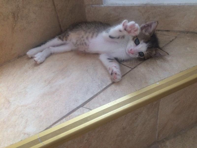 MUGUREL - chat mâle, né mai 2017. Très gentil et doux - CARMINA BUCAREST - adopté en Allemagne Img_4417