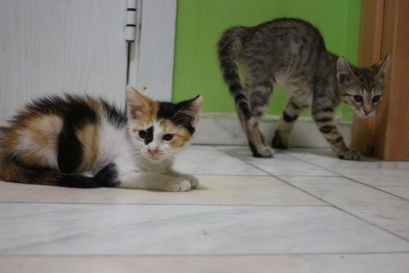 COCOS - chat mâle, né en juin 2017. Très gentil - CARMINA BUCAREST. Adopté via une autre asso Img_6110