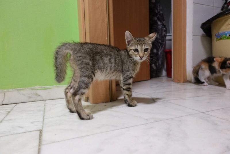 COCOS - chat mâle, né en juin 2017. Très gentil - CARMINA BUCAREST. Adopté via une autre asso Img_6111