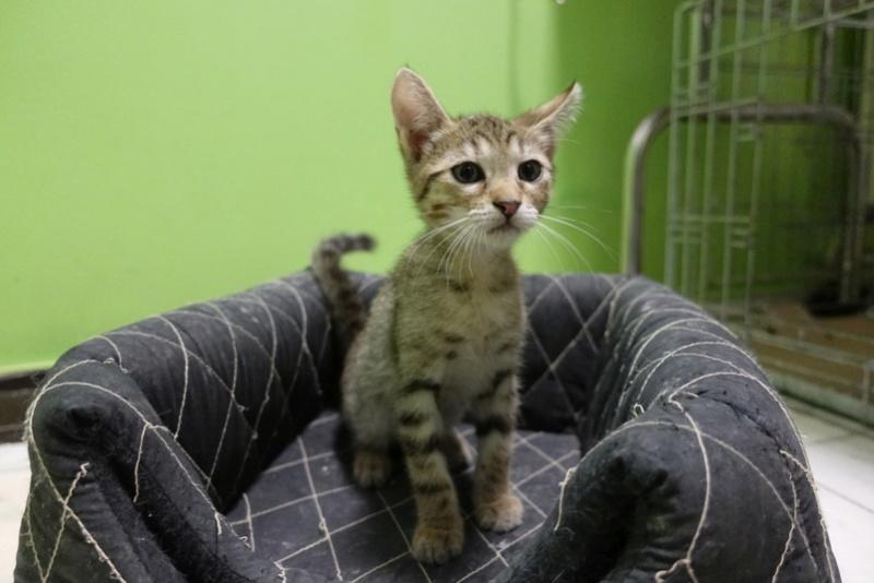 COCOS - chat mâle, né en juin 2017. Très gentil - CARMINA BUCAREST. Adopté via une autre asso Img_6112