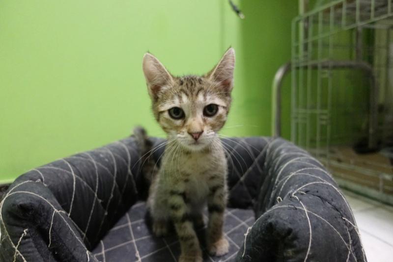 COCOS - chat mâle, né en juin 2017. Très gentil - CARMINA BUCAREST. Adopté via une autre asso Img_6113