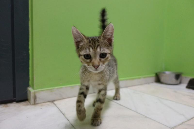 COCOS - chat mâle, né en juin 2017. Très gentil - CARMINA BUCAREST. Adopté via une autre asso Img_6116