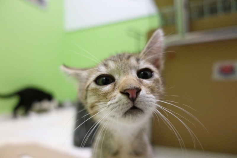 COCOS - chat mâle, né en juin 2017. Très gentil - CARMINA BUCAREST. Adopté via une autre asso Img_6117