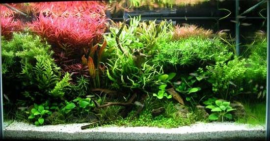 Premier Aquarium  58g_aq10