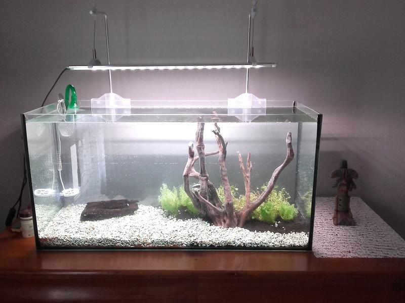 Aquarium 96L Tony.C Jour110