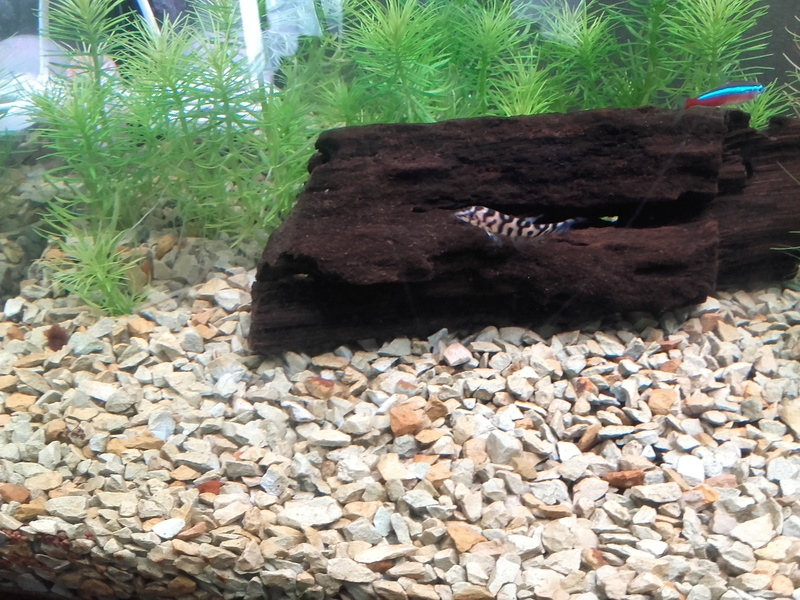 Aquarium 96L Tony.C Ma_loc10