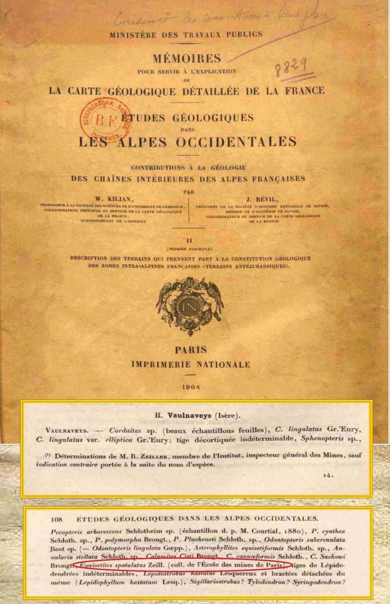 Flore Carbonifère des Alpes Françaises part 2 4_taxo10