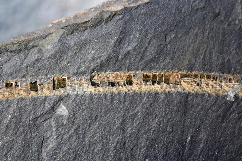 Flore Carbonifère des Alpes Françaises part 2 Img_2911