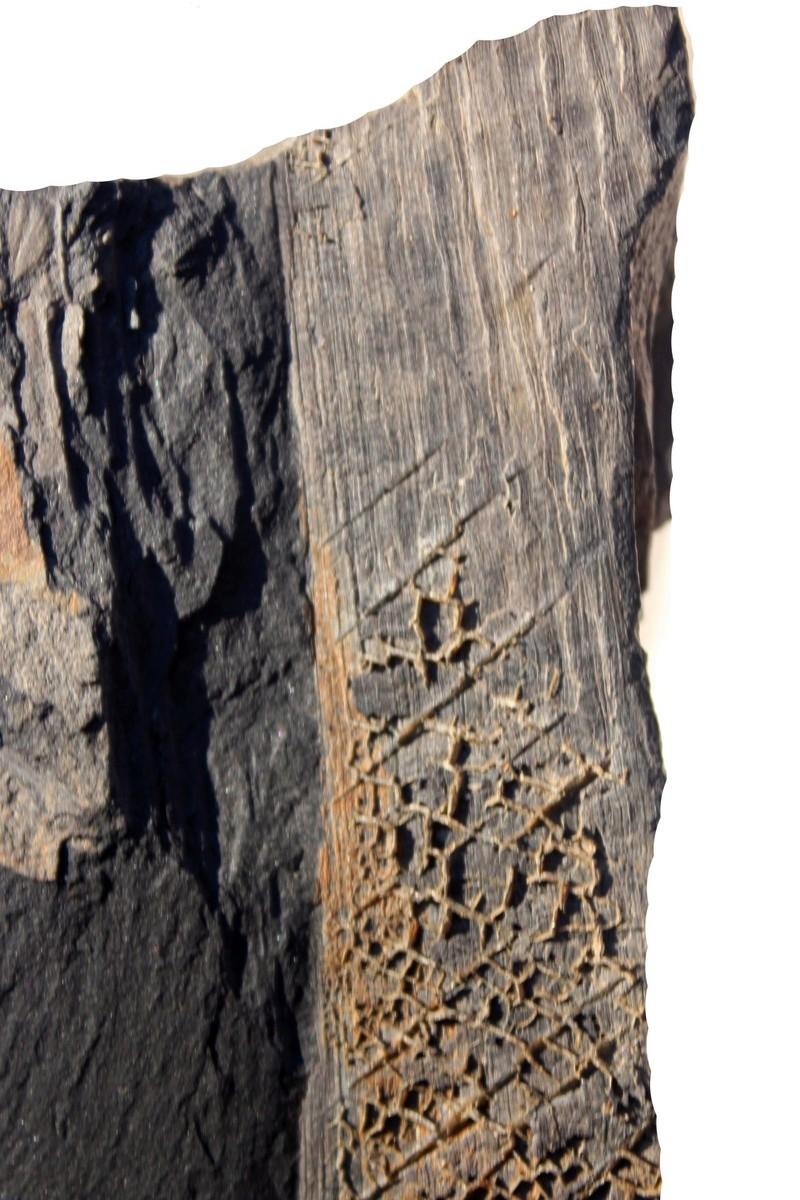 Flore Carbonifère des Alpes Françaises part 2 Img_2917