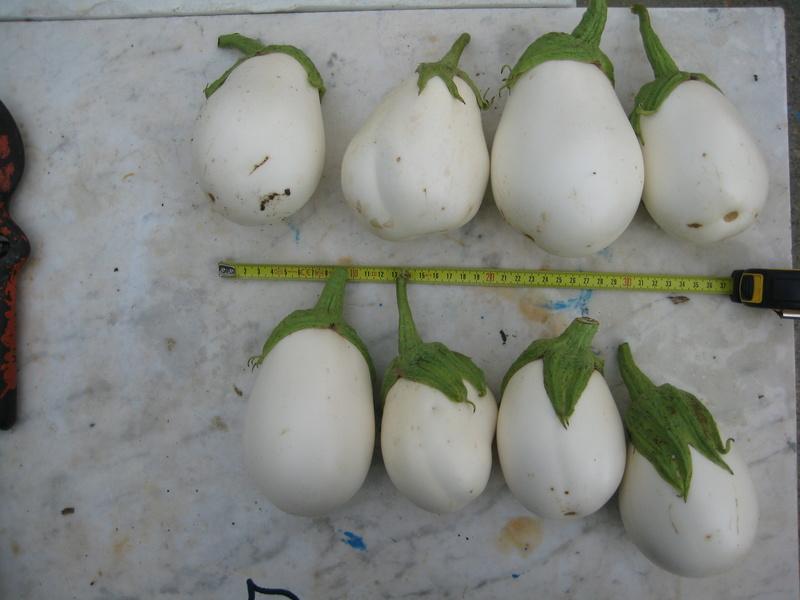 Las berenjenas blancas en forma de huevo se van imponiendo. Img_5110