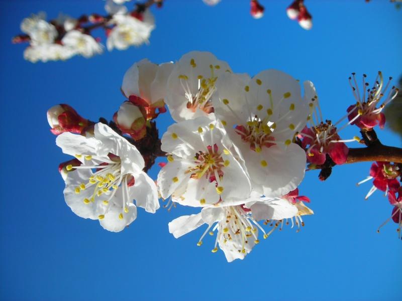 Nuestro jardín de Sa Possessió - Página 2 145_fl10