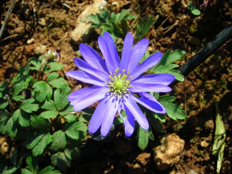 Nuestro jardín de Sa Possessió - Página 2 148_fl11