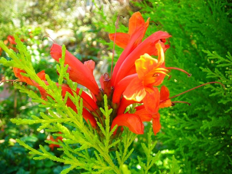 Nuestro jardín de Sa Possessió - Página 2 148_fl12