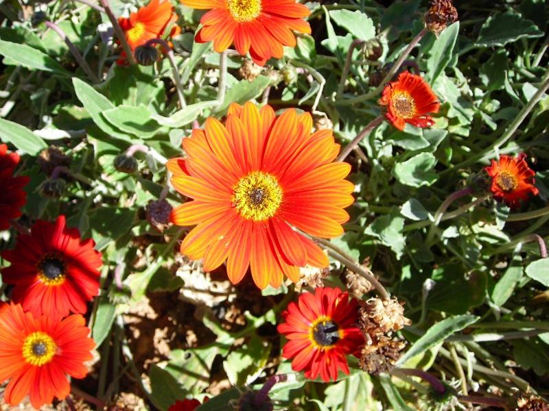 Nuestro jardín de Sa Possessió - Página 2 158_pe10