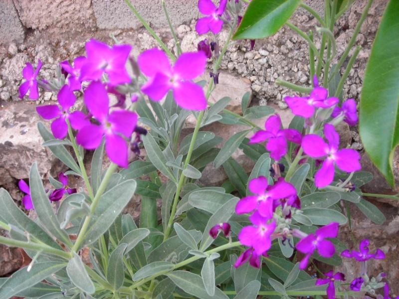 Nuestro jardín de Sa Possessió - Página 2 165_fl10