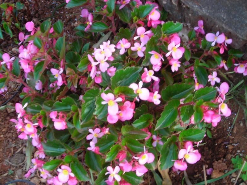 Nuestro jardín de Sa Possessió - Página 2 167_ro11