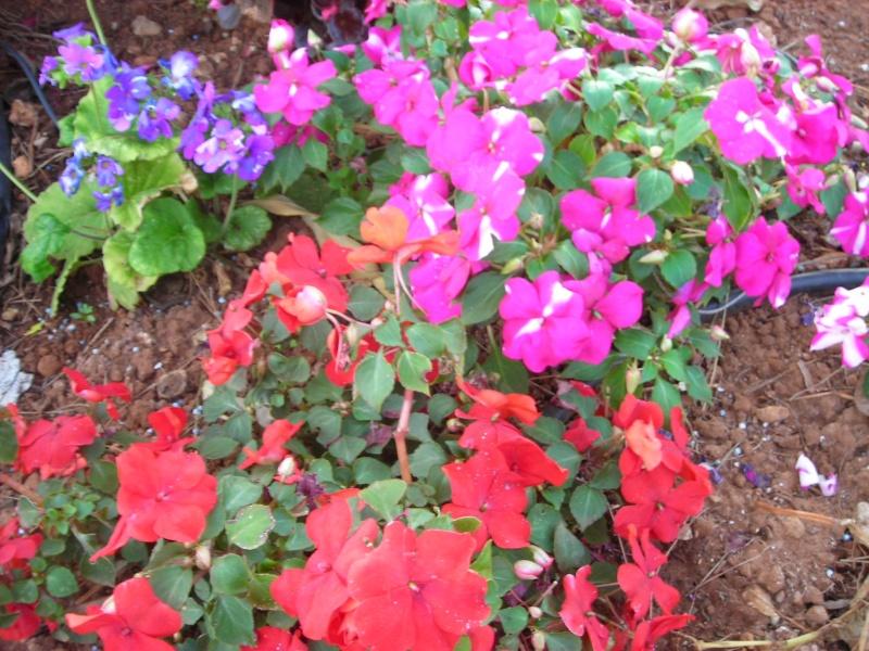 Nuestro jardín de Sa Possessió - Página 2 167_ro12