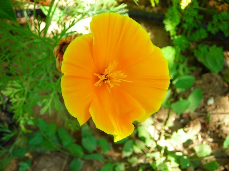 Nuestro jardín de Sa Possessió - Página 2 172_fl11