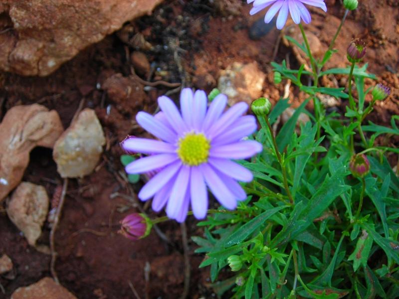 Nuestro jardín de Sa Possessió - Página 2 172_fl12